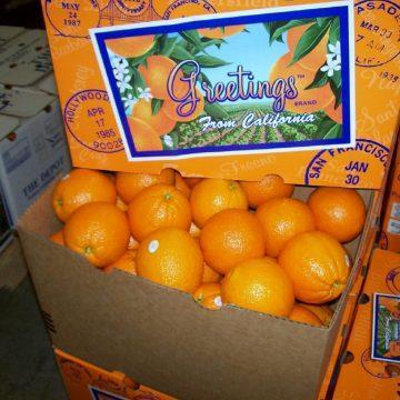 40 lb. Navel Oranges